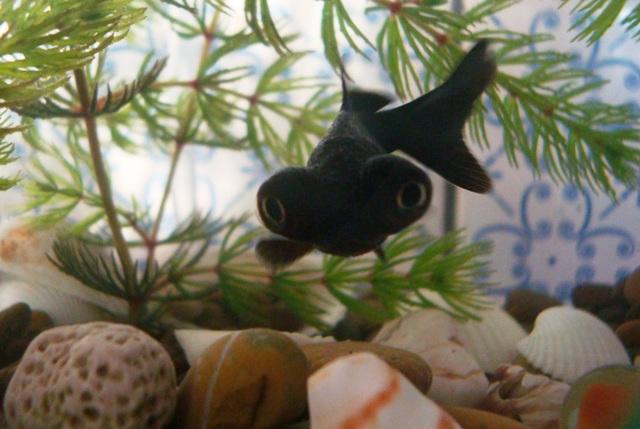 foto de Un Blog Gracioso: Pongale nombre al pez 2 y una noticia