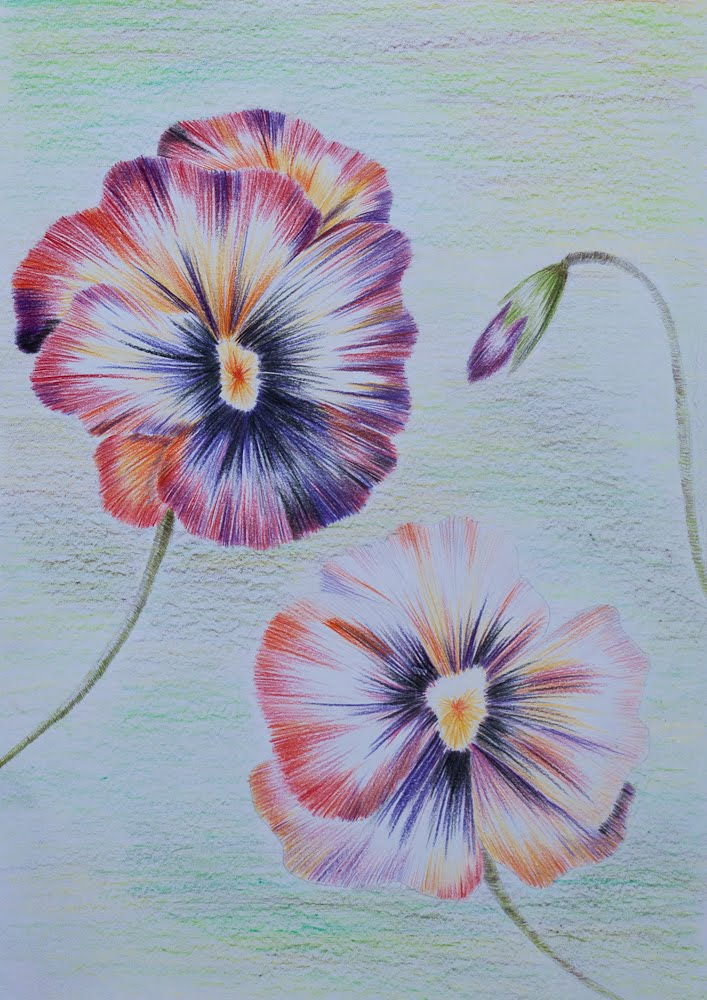 pansy flower drawing - photo #10