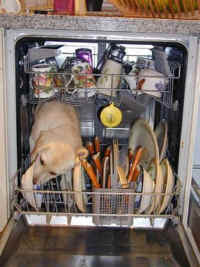 picture of a dog licking a plate in a dishwasher