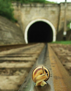 picture of a snail on the railroad tracks looking back at a tunnel