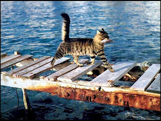 Picture of a cat crossing an old bridge with a fish in its mouth
