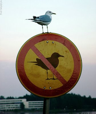photo of a seagull sitting on a sign that says no seagulls