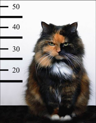 photo of a cat as a mugshot