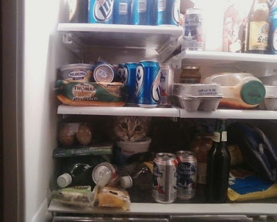 photo of a cat in a refrigerator