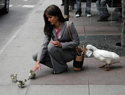 photo of duck stealing money from purse
