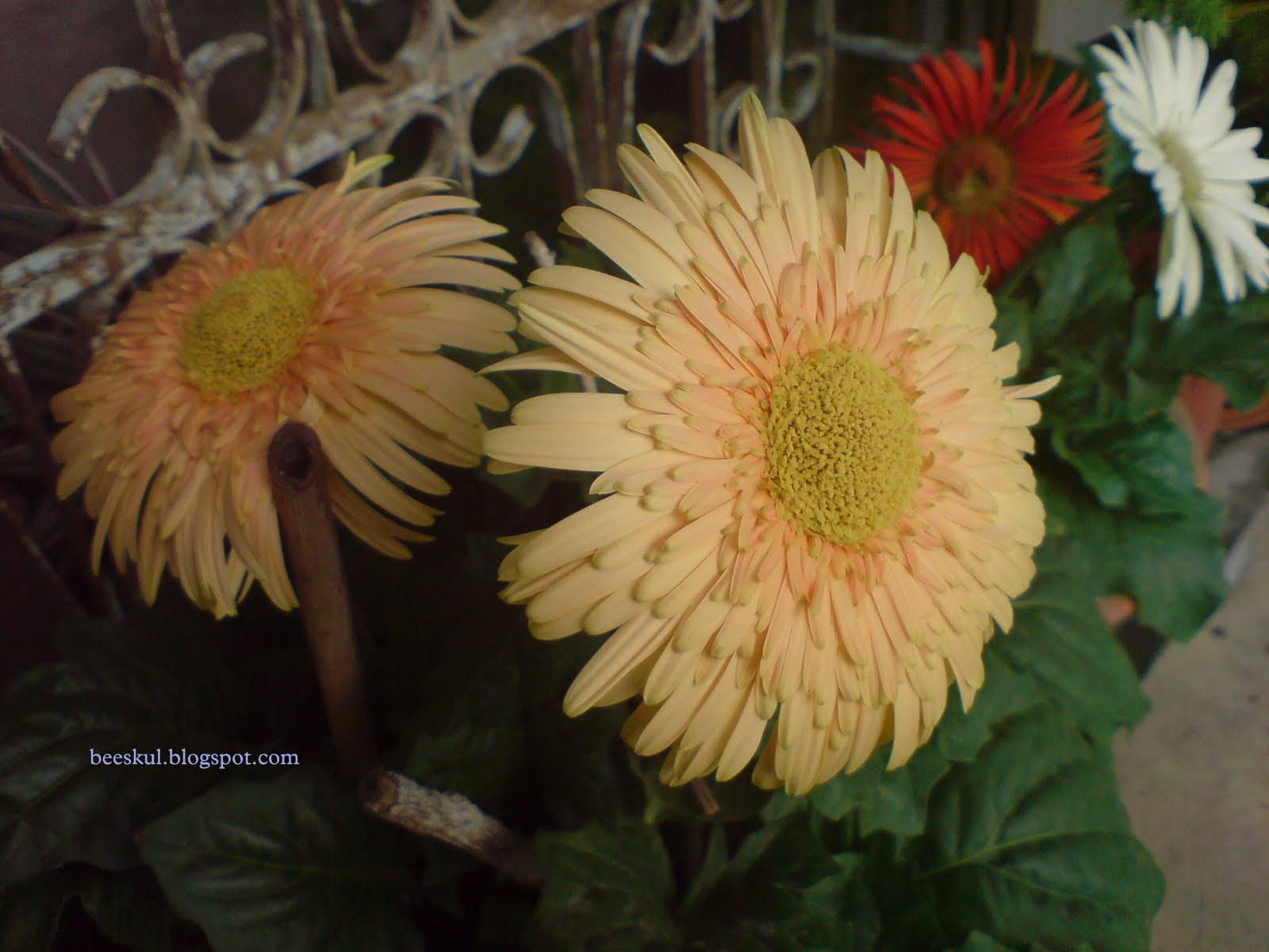 PerJaLANan: Bunga-Bunga Berkembang