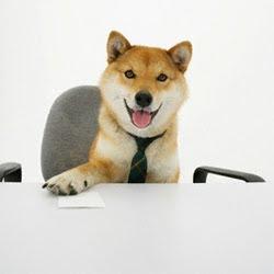 http://2.bp.blogspot.com/_lYto47lVsQQ/SpY_QRIIRxI/AAAAAAAAAkU/xgIQOTByTxo/s320/anjing-kaya-1.jpg