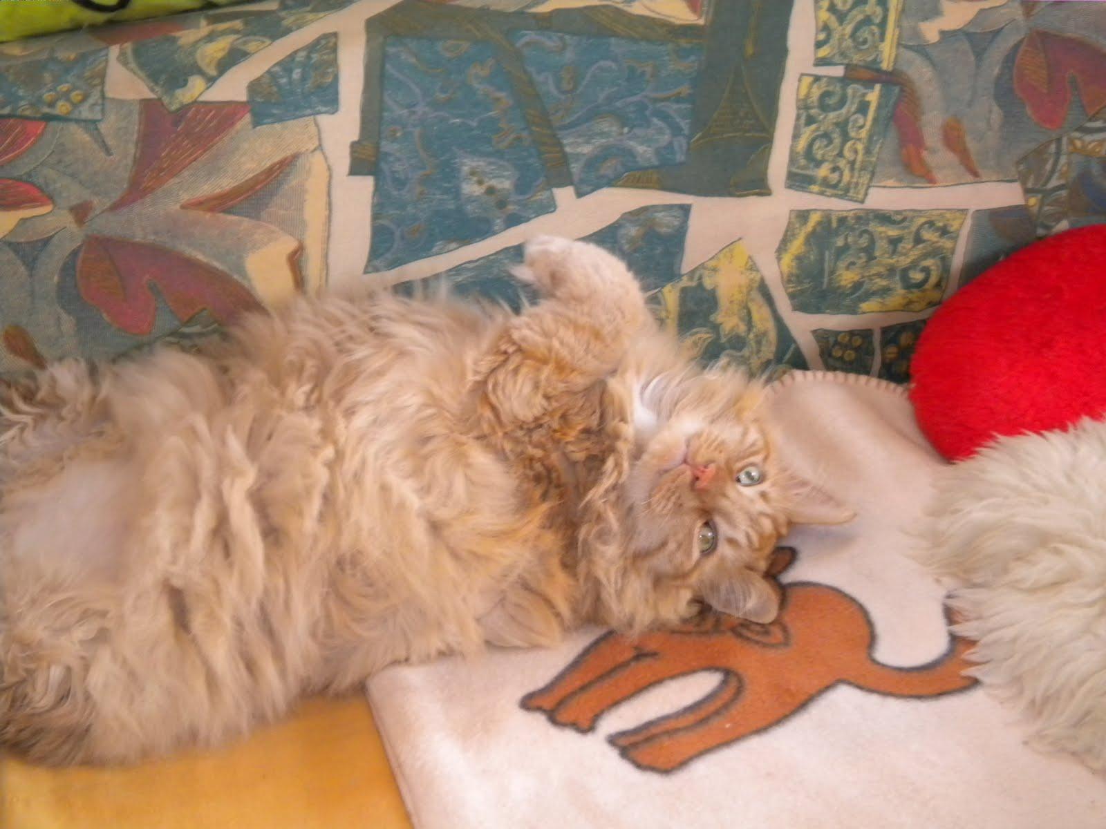 hexen heiler kräuter katzen und leben im Einklang mit der Natur