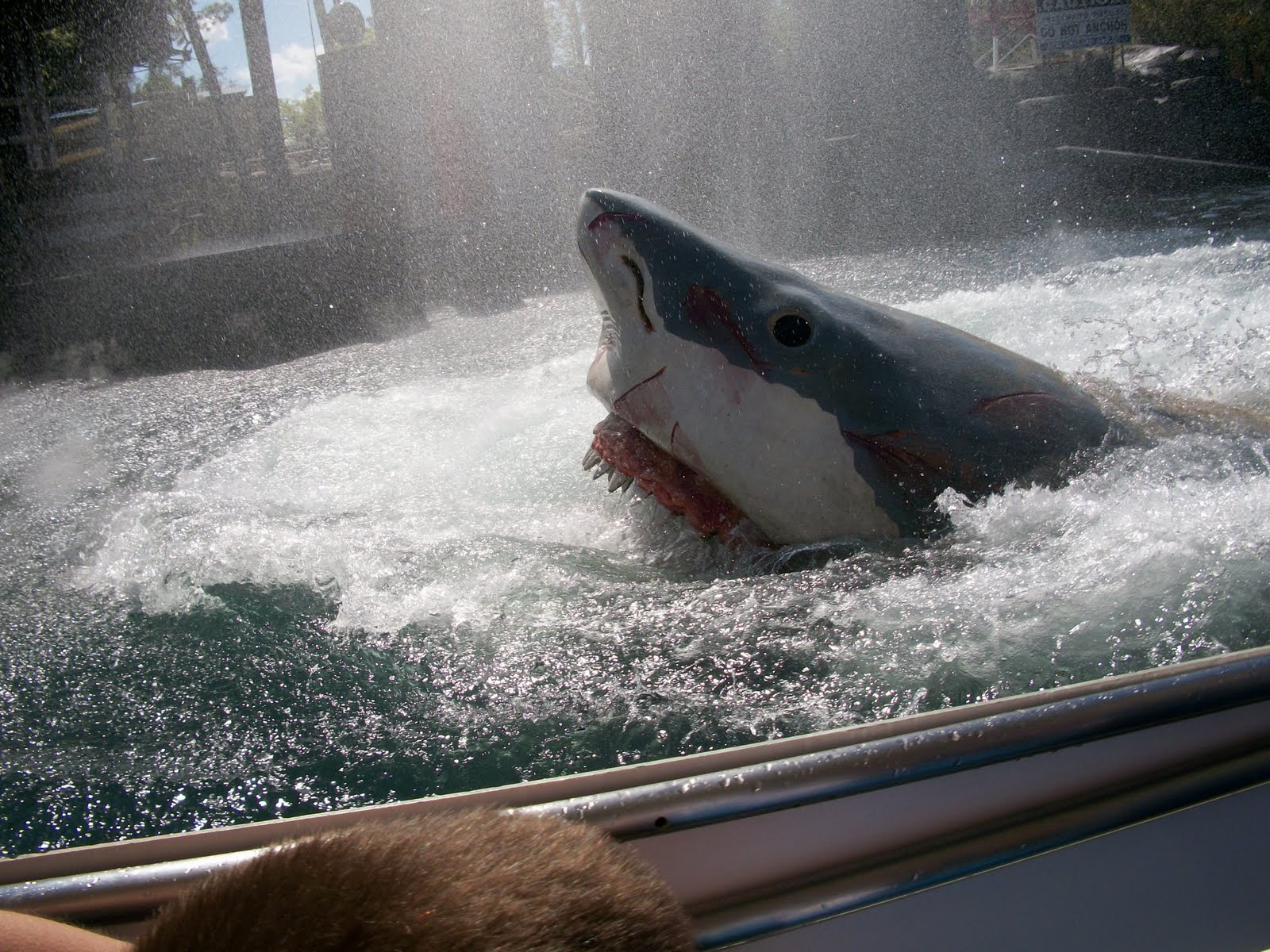 Life The Universe And Everything Sharks Are Scary When