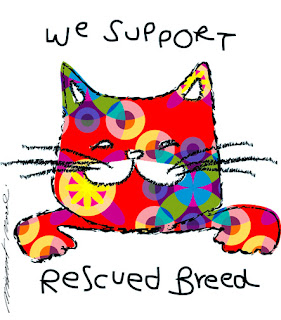 Adopt a Rescued Kitty