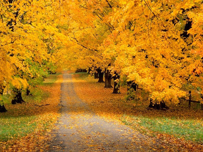 camino-cubierto-por-las-ramas-de-los-arboles