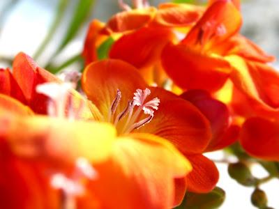 flores-de-petalos-color-anaranjado