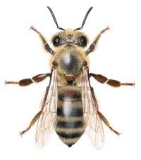 Bier og veps