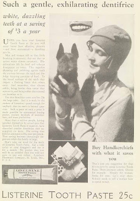 Scottish Terrier with flapper