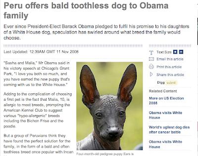 Peruvian Hairless Dog for Obamas