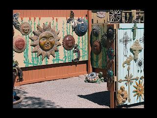 Bumper Ocotillo Seed Harvest | Cactus Joe's Las Vegas Nursery
