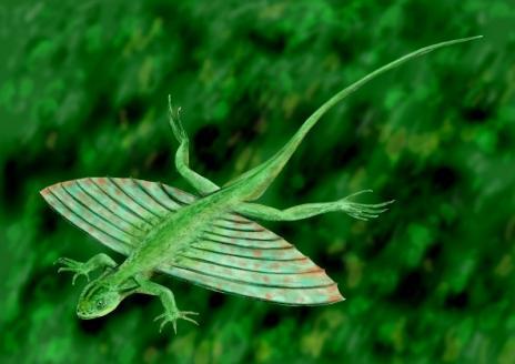 hewan apa saja yang bisa terbang walau tidak punya sayap 10 Hewan Selain Burung yang Bisa Terbang