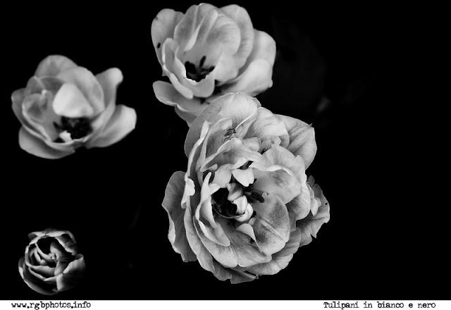 Fotografia di tulipani in bianco e nero