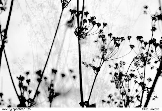 Fotografia di rami secchi di arbusto in bianco e nero