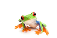 , Eat a Frog for Breakfast!