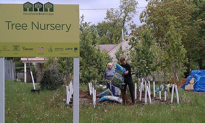 The Ecovillage Tree Nursery Is Full Again