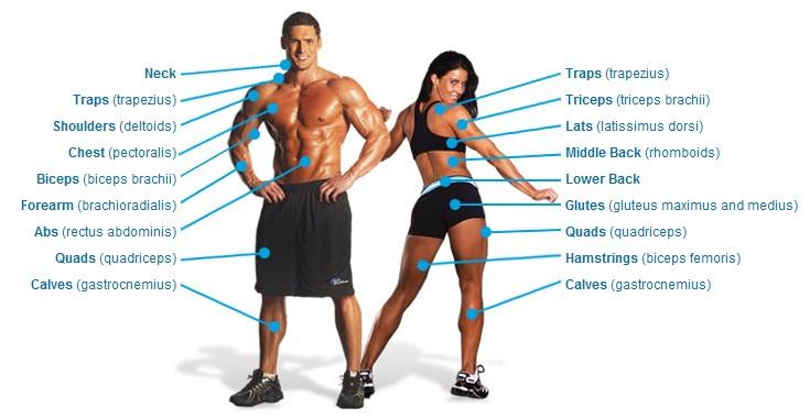 ... solamente le das click a la parte del cuerpo que quieras ejercitar ea9360a95fac