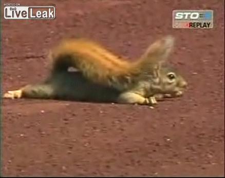 Squirrel Fuck 37