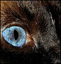 """Who can believe that there is no soul behind those luminous eyes!"" - Theophile Gautier"