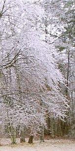 Ice 2009