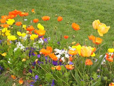 http://2.bp.blogspot.com/_miBh5dQT1sc/SfvPK5h1YII/AAAAAAAABe4/UdFjRbH-kUc/s400/flores+naranja+violeta+amarilla+-+Copia.JPG