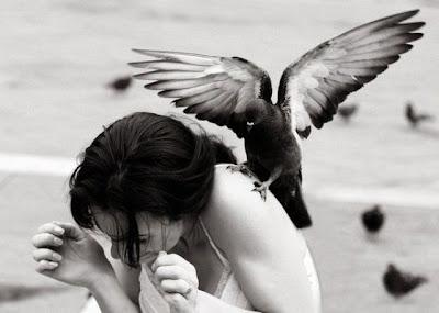 طيور مزعجة
