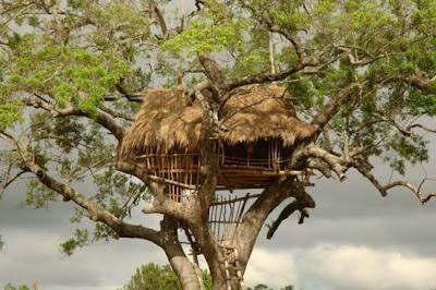 [Image: tree_house.jpg]