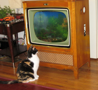 Convert Your Old Tv Into A Fish Tank Damn Cool Pictures