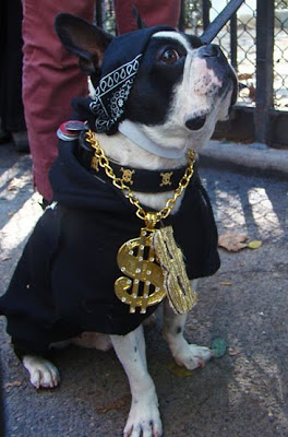 Gangsta Dogs Damn Cool Pictures