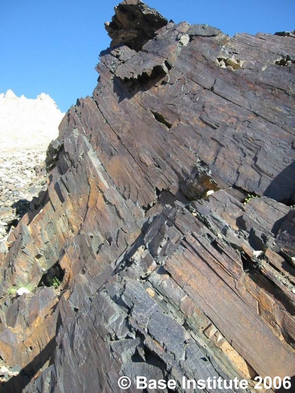 carbon dating petrified wood