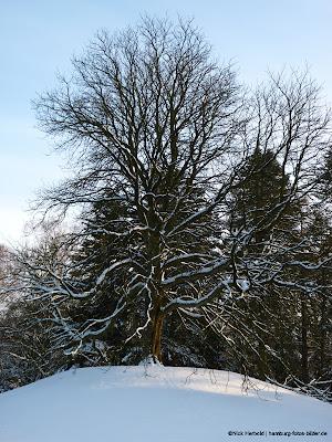 Baum und Schnee, einzelner Baum auf verschneitem Hügel