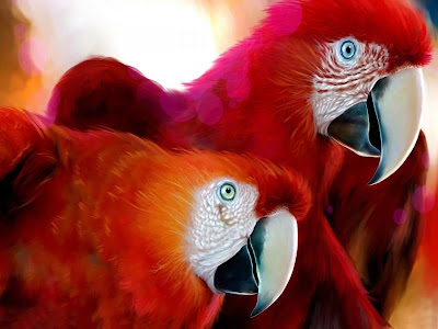 Cute Colorful red Parrots Around the World