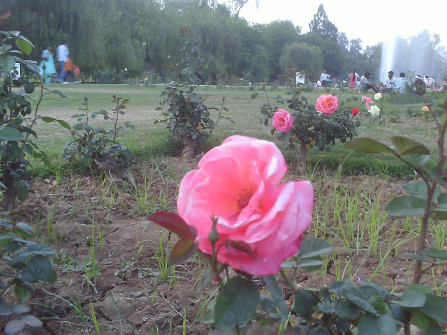ROSE GARDEN, CHANDIGARH