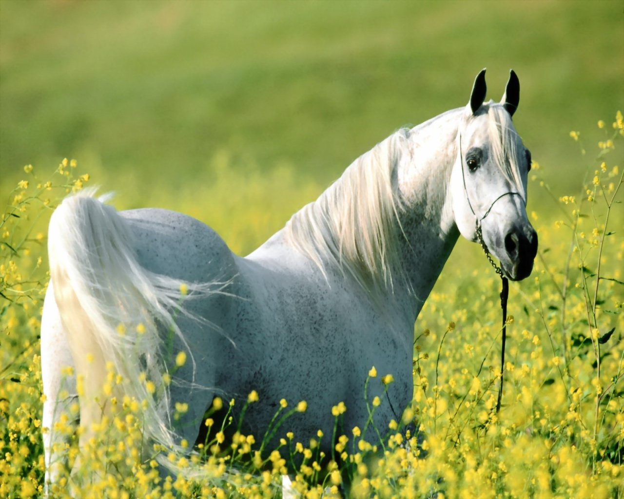 Awesome HD Horse Wallpapers