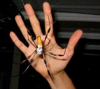 http://2.bp.blogspot.com/_nEaZ1NpQBgM/Sa4K--nOSvI/AAAAAAAAAp4/X0J1mWZKVCk/s400/heather-banana-spider-780240.jpg