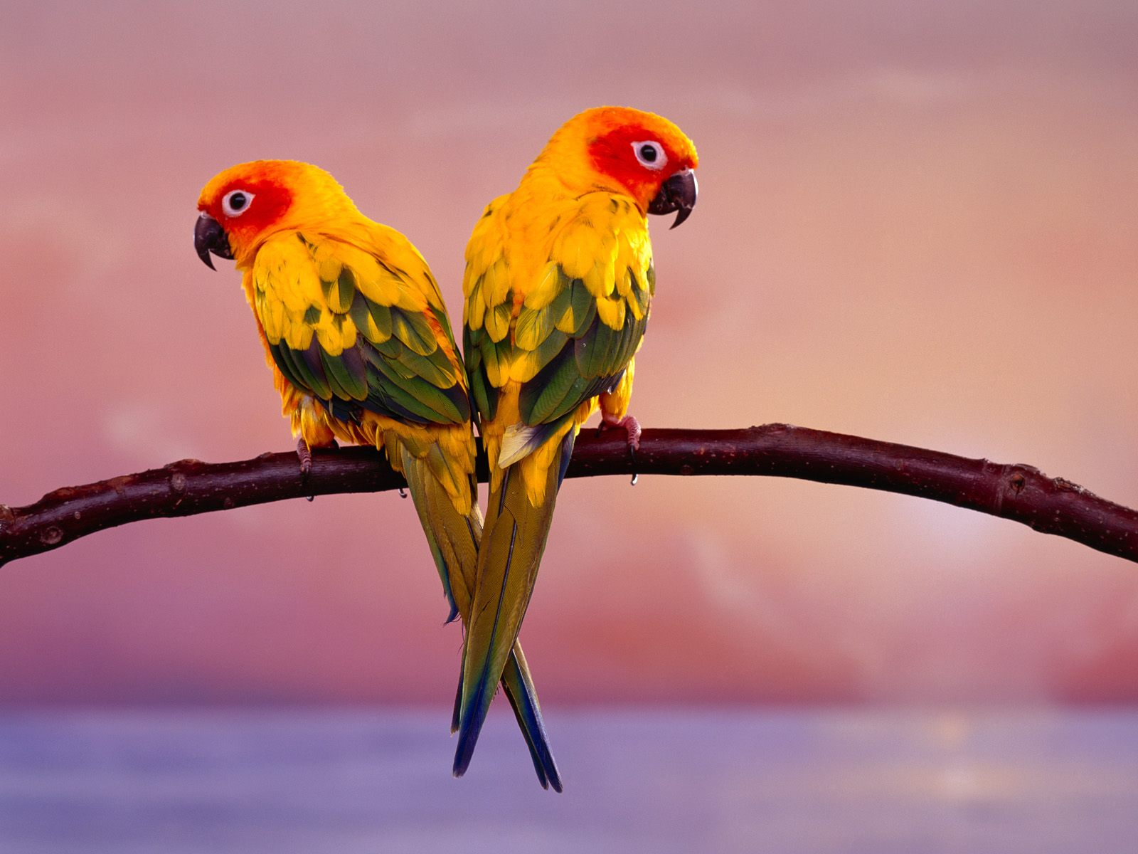Wallpapers Love Birds: Life Is Better With A Cute Outfit: Love Birds Wallpapers
