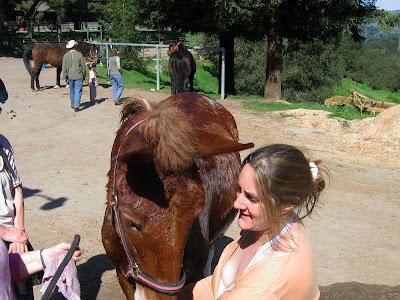 mule getting a bath
