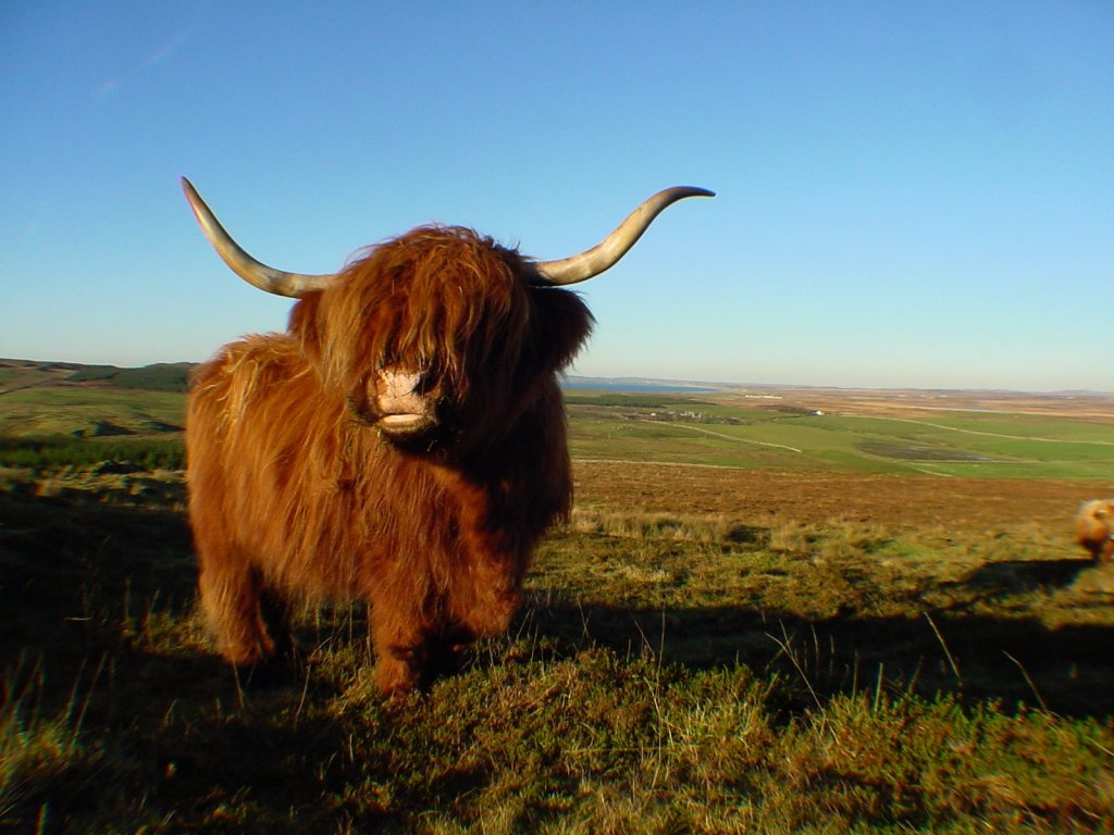 Image Of A Yak: Dr Wommm's Patented Stupidity Cure: July 2010