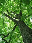 Trees - carbon sequesters and oxygen givers - just love them!
