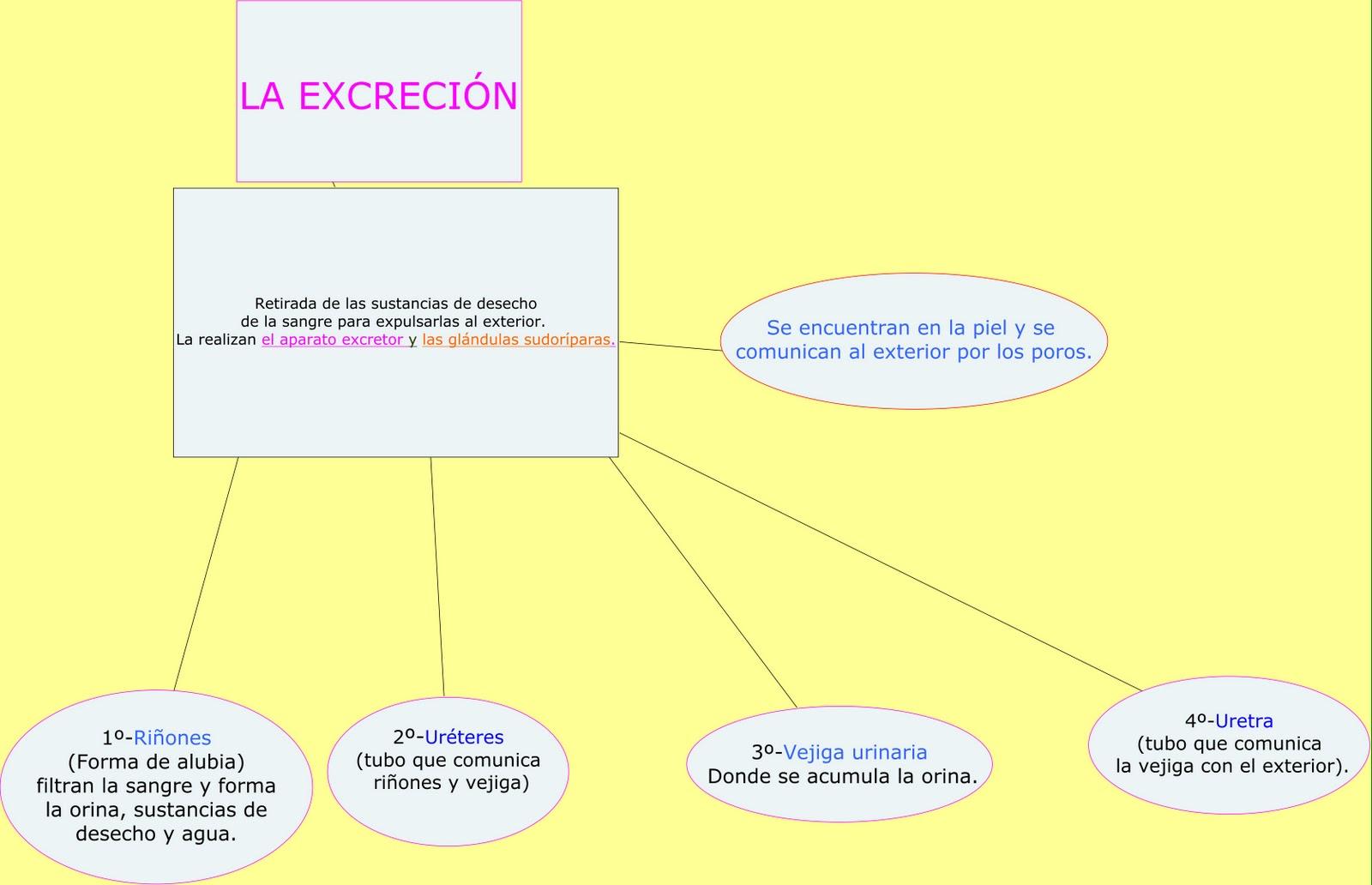 blog del cole: UNIDAD 2 LA EXCRECIÓN