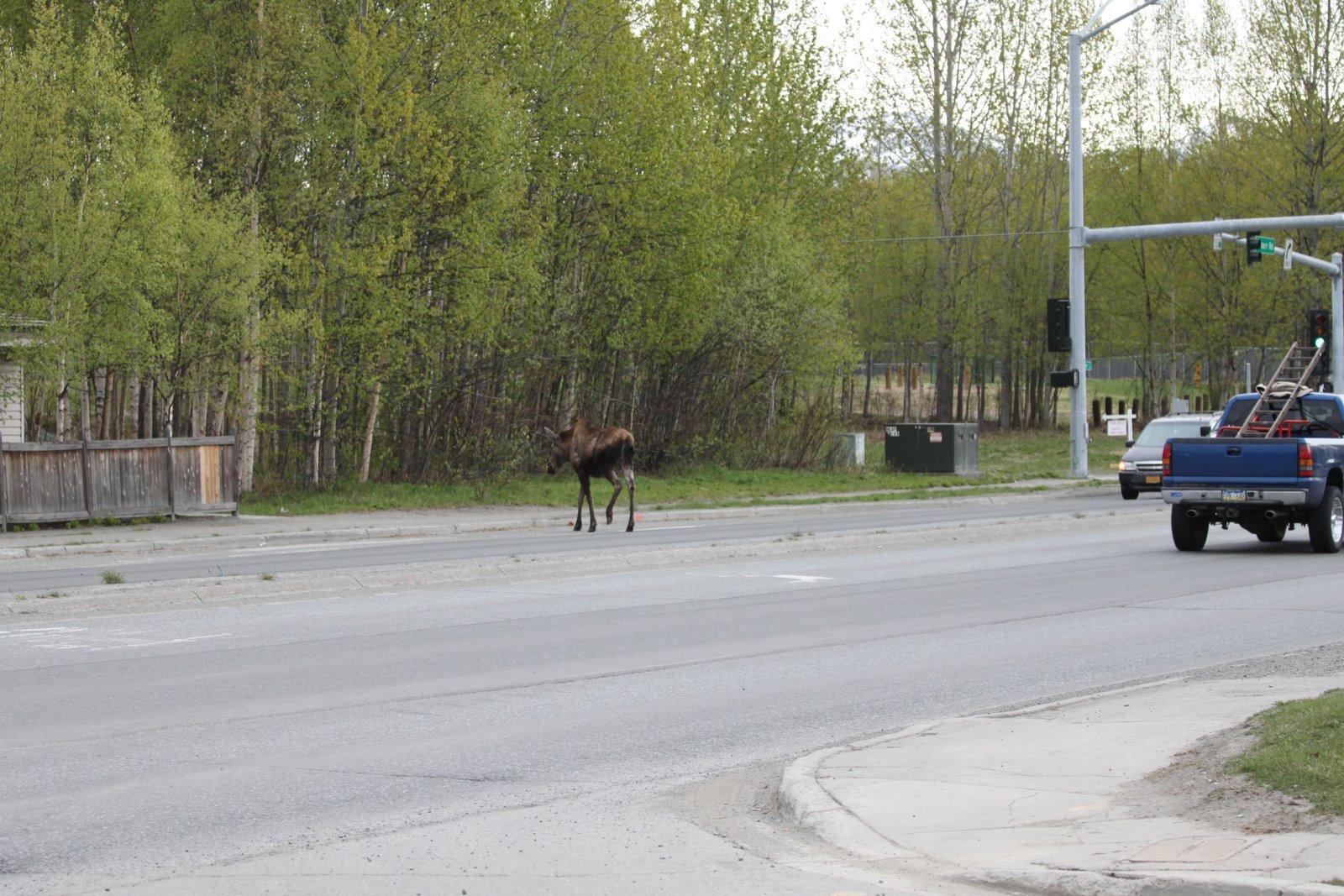 Alaska Car Insurance Companies