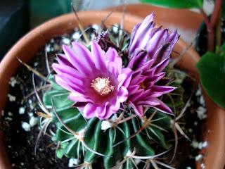 Mes passions: Visite au Cactus Fleuri