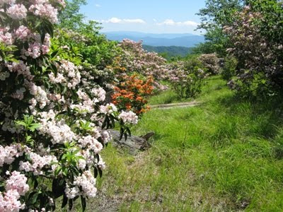 June Hike of the Month: Spence Field / Rocky Top