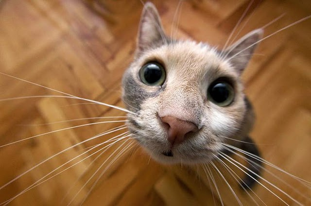 10 Bizarre Animals That Are Secretly Cute  |Weird Cute Animals