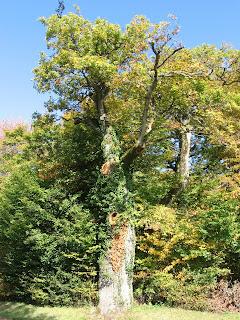 Traditions celtes : le chêne, arbre sacré 3